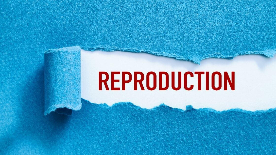 Репродуктивни проблеми